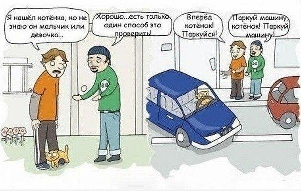 Я нашел котенка, но не знаю он мальчик или девочка... Хорошо.. есть только один способ это проверить! Вперед, котенок, паркуйся! Паркуй машину, котенок! Паркуй машину!
