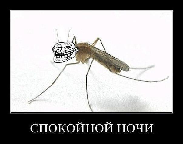 Спокойно ночи! Довольный комарик. Комар