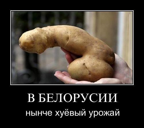 В Белоруссии нынче хуевый урожай