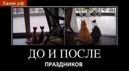 До и после праздников. Худые кошки и толстые кошки