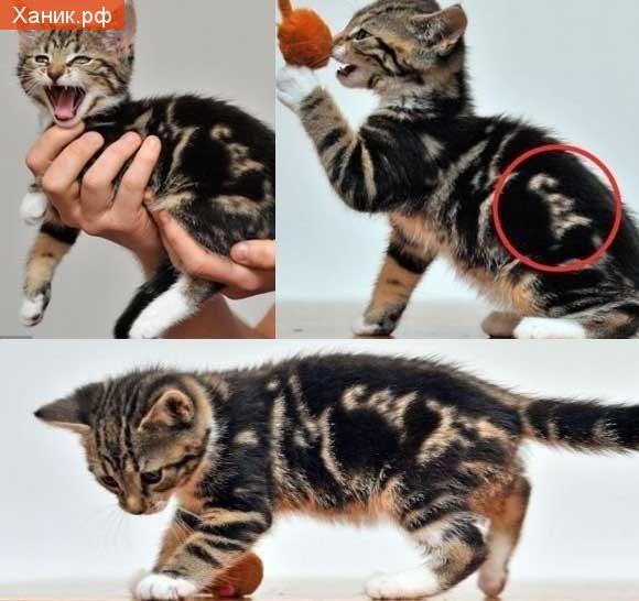 Котенок с надписью Cat на спине