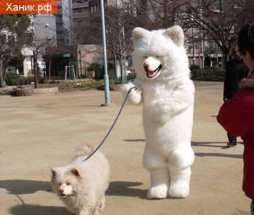 Какой хозяин, такая и собака. Собака и собака