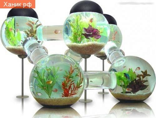 Многокомнатный аквариум