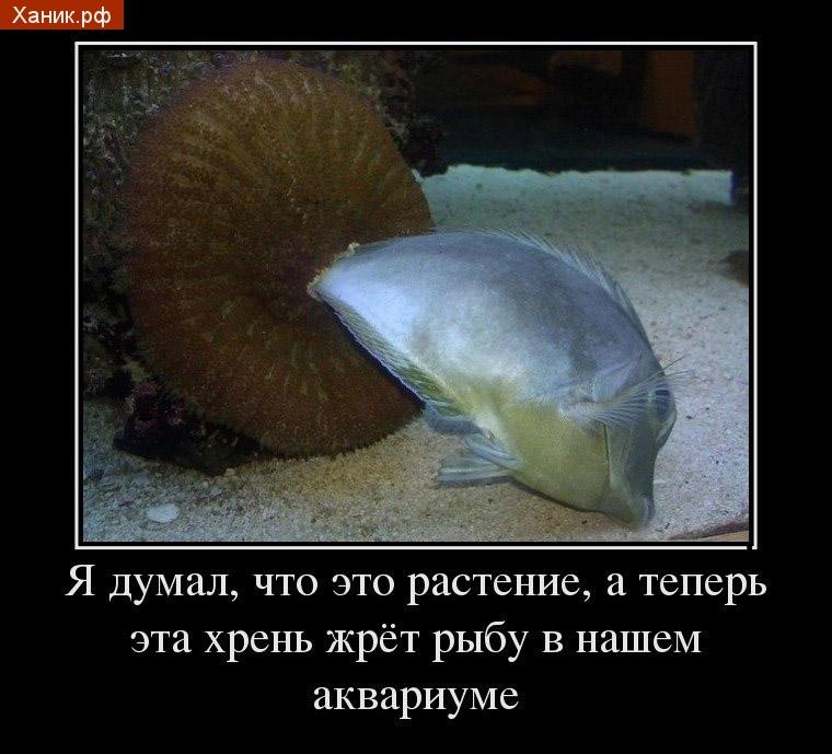 Я думал это растение, а теперь эта хрень жрет рыбу в нашем аквариуме