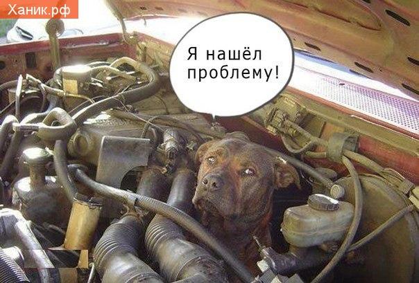 Пес под капотом. Я нашел проблему. Ремонт автомобиля
