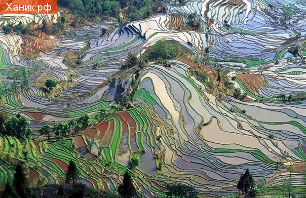 Цветочные поля на юге Китая. Цветы. Фотография