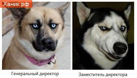 Генеральный директор и заместитель генерального директора. Собаки с гримасой