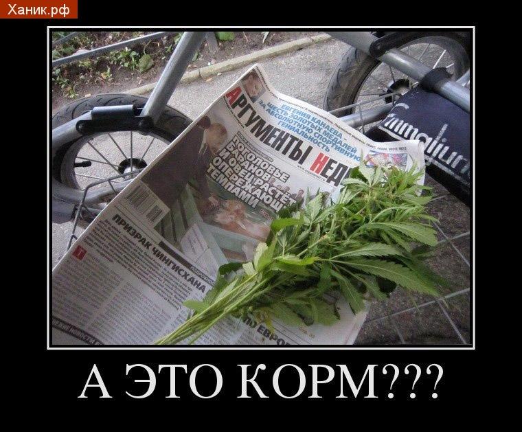 А это корм? Демотиватор. Трава. наркотики