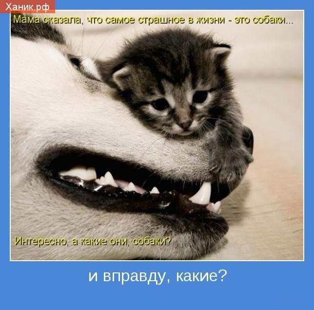 Мама сказала, что самое страшное в жизни - это собаки.. Интересно, а какие они, собаки? Мотиватор. И вправду какие?