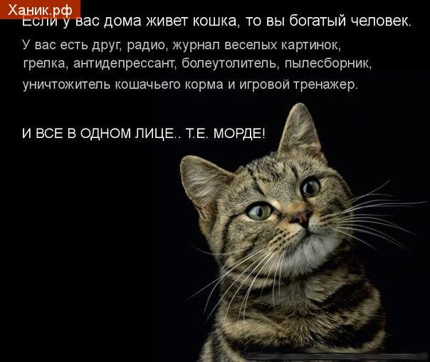 Если у вас дома живет кошка, то вы богатый человек. У вас есть друг, журнал веселых картинок, грелка, болеутолитель, пылесборник, уничтожитель кошачьего корма и игровой тренажер. И все в одном лице.. т.е. морде