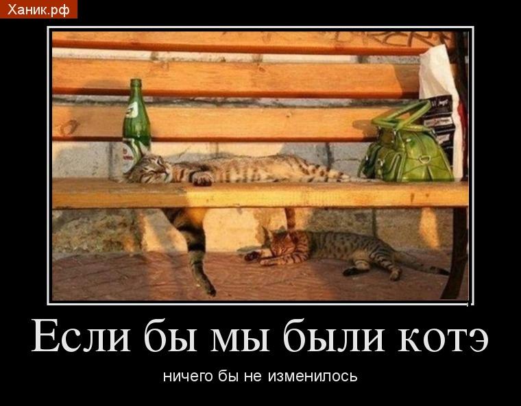 Демотиватор. Алкоголь. Пьяные кошки. Если бы мы были котэ ничего бы не изменилось
