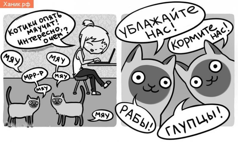 Котики опять мяучат! Интересно, о чем? Мяу, мяу! Ублажайте нас! Кормите нас! Рабы! Глупцы!