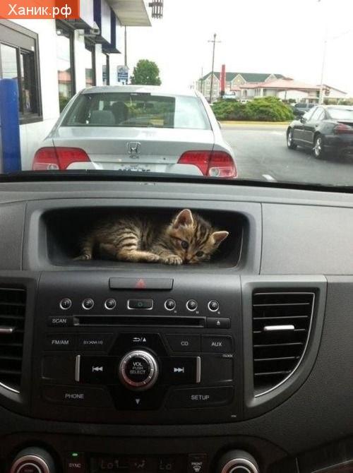 Котенок - путешественник. Котенок в бардачке