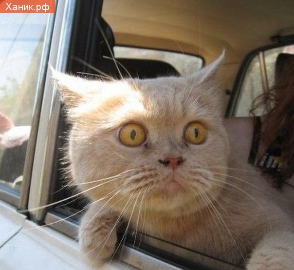 И что собаки в этом находят. Кошка высовывается из окна