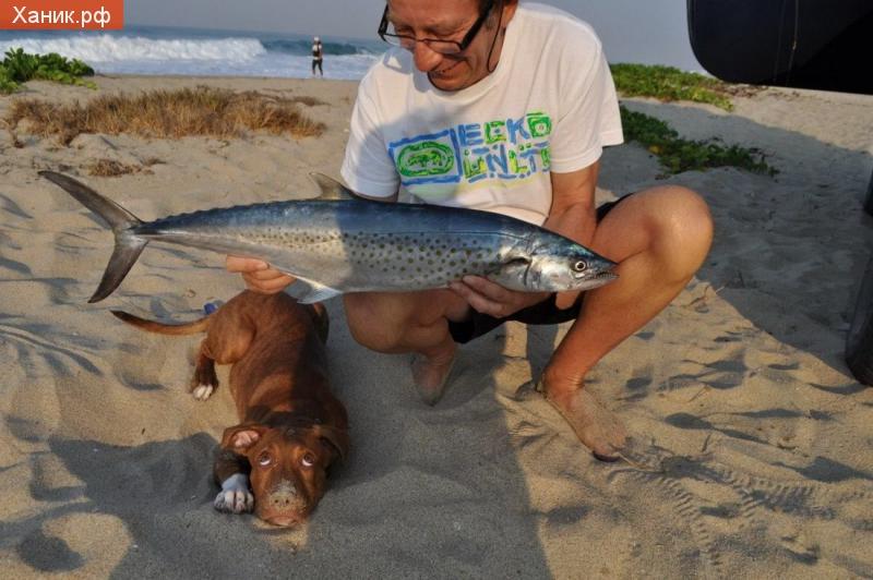 Собаку похоже достало рыбное меню. Собачка лежит с грустными глазами