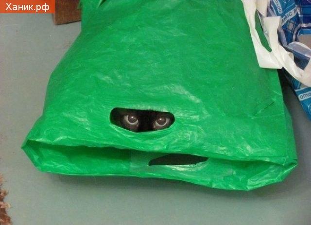 черепаха ниндзя)) Кошка в пакете