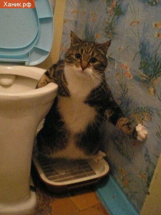 Ой,а я думал,что никто не увидит,так неудобно. Кот в туалете
