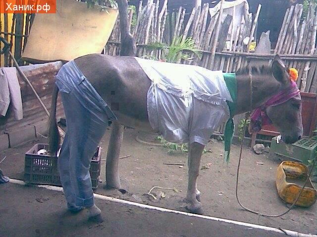 Еще одно фото из серии: хазяин хозяин дебил) Одетый осел