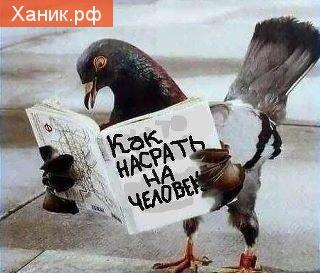 Голубь читает книгу Как насрать на человека