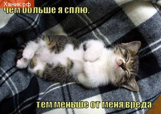 Чем больше я сплю, тем меньше от меня вреда. Котик