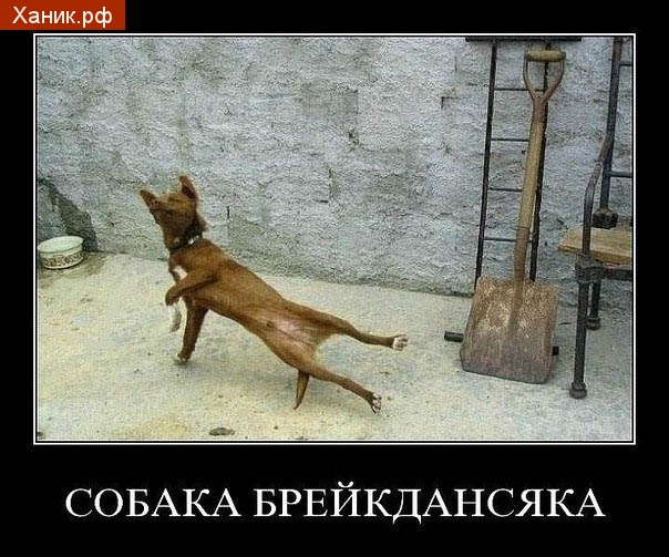 Собака брейкдансяка. Демотиватор. Танцующая собака