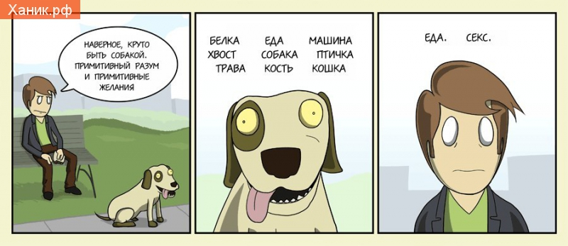 Наверно круто быть собакой. Примитивный разум и примитивные желания. Белка еда машина хвост собака птичка трава кость кошка. Еда секс