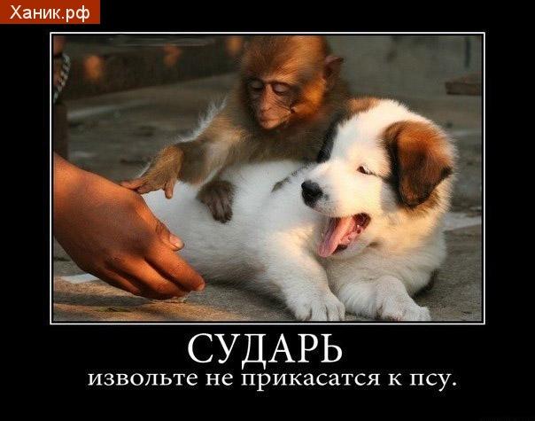 Сударь, извольте не прикасаться к псу. Демотиватор. Обезьяна и собачка.