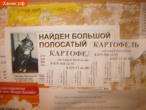 Объявление. Найден большой полосатый картофель