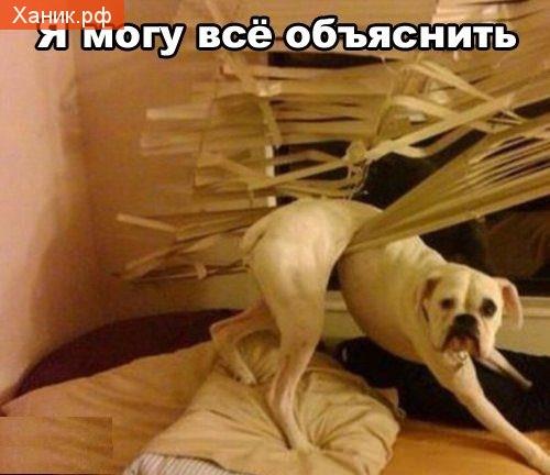Смешная собачка. Я могу все объяснить!
