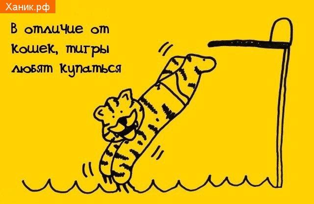 В отличии от кошек, тигры любят купаться