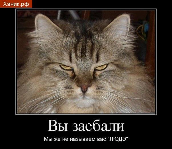 Демотиватор. Злой кот. Вы заебали! Мы же не называем вас ЛЮДЭ!