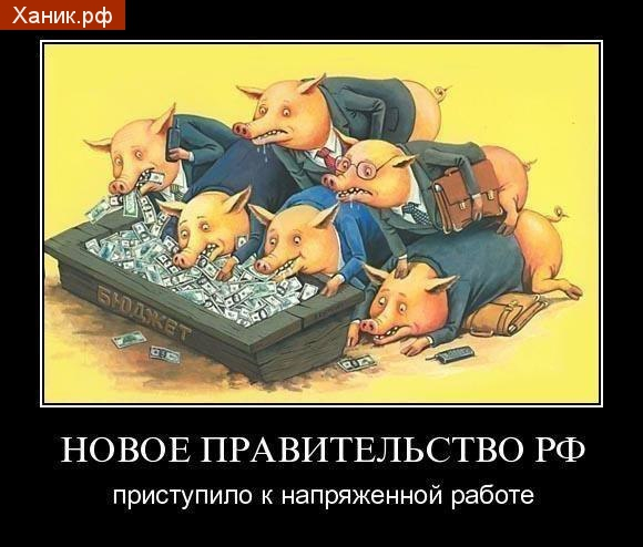 Демотиватор. Новое правительство РФ приступило к напряженной работе. Свиньи жрут деньги