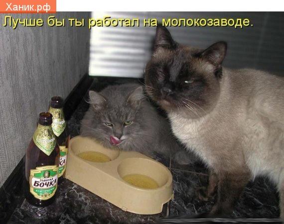 Лучше бы ты работал на молокозаводе. Кошки пью пиво