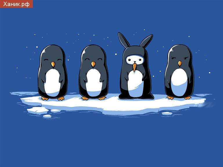 Пингвинчики и замаскированный заяц