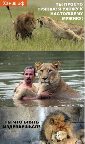 Комикс про льва и львицу. Ты просто тряпка! Я ухожу к настоящему мужику! Ты что блять издеваешься?