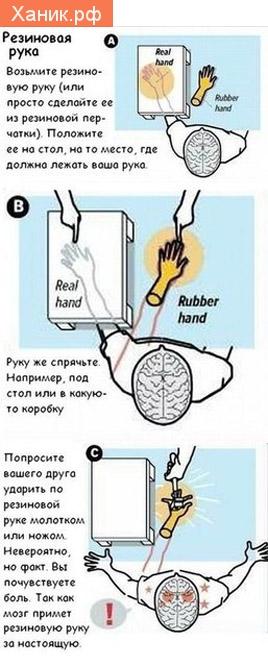 Иллюзия. Резиновая рука