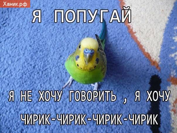 Я попугай, я не хочу говорить. Я хочу чирик-чирик-чирик-чирик