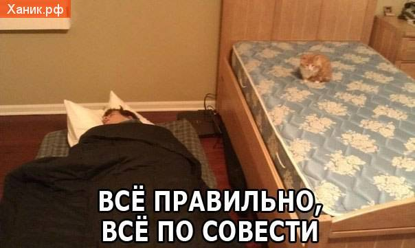 Все правило, все по совести. Кот спит на кровати, а я на полу