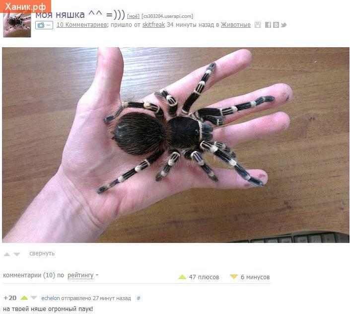 Моя няшка. На твоей няшке огромный паук!