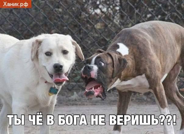 Собаки. Ты че в Бога не веришь?!