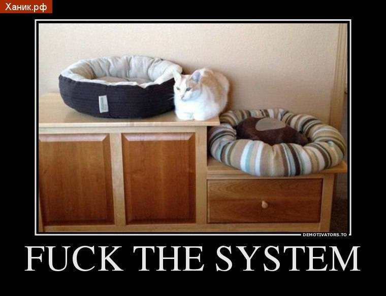 Fuck the system. Кошка спит между кроватями. Демотиватор