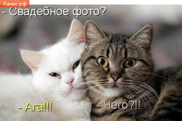 Кошки. Свадебное фото? Ага! Чего?