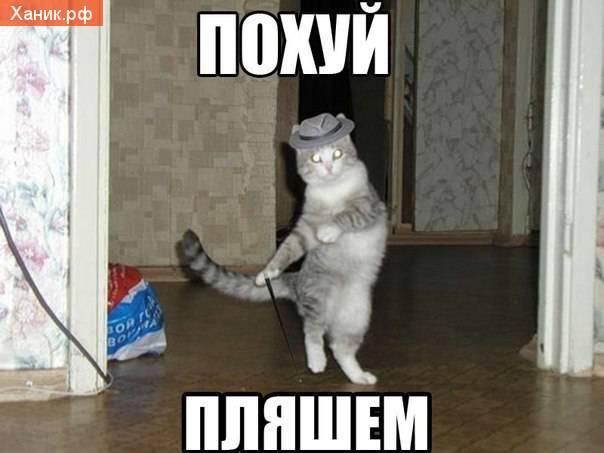 Похуй, пляшем! Кот в шляпе