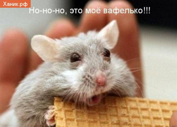 Злая крыса. Но-но-но, это мое вафелько!!!