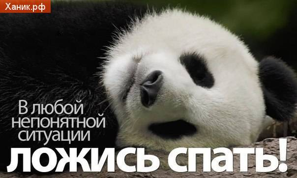 В любой непонятной ситуации ложись спать! Панда