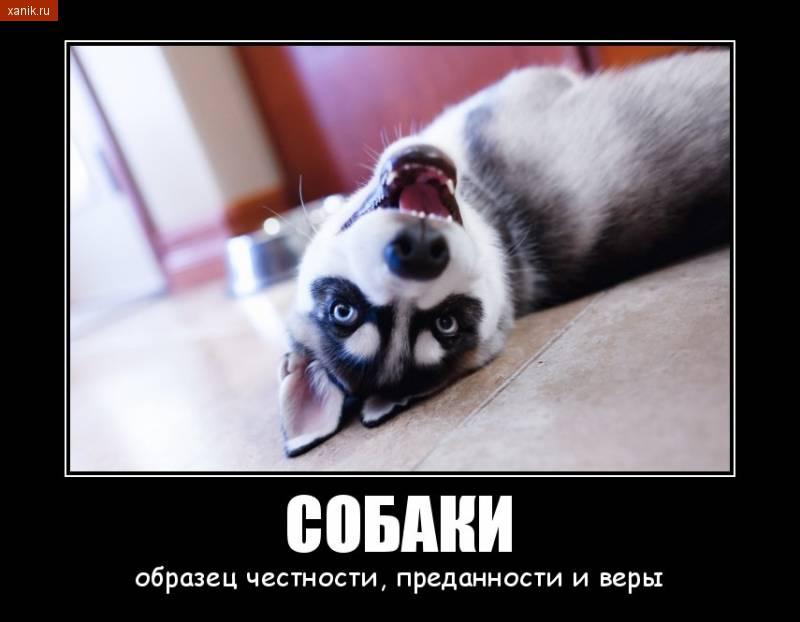 Собаки - образец честности, преданности и веры