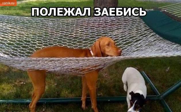 Полежал заебись..  собака на гомаке