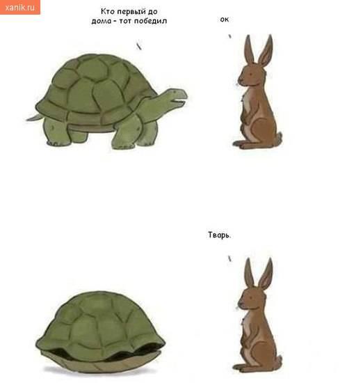 Кто первый до дома, тот победил.. Черепаха и заяц