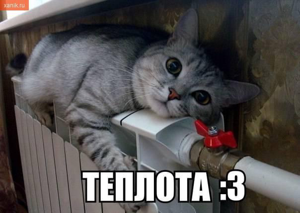 Теплота.. Кошка на батарее
