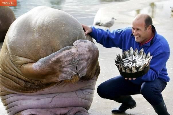 Подарок морскому льфу на день рождения!